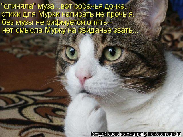 """Котоматрица: стихи для Мурки написать не прочь я. """"слиняла"""" муза...вот собачья дочка... без музы не рифмуется опять-- нет смысла Мурку на свиданье звать..."""