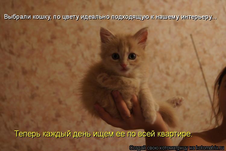 Котоматрица: Теперь каждый день ищем ее по всей квартире. Выбрали кошку, по цвету идеально подходящую к нашему интерьеру...