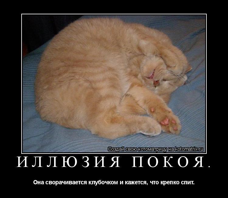 Котоматрица: Иллюзия покоя. Она сворачивается клубочком и кажется, что крепко спит.