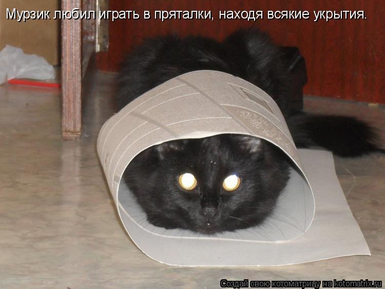 Котоматрица: Мурзик любил играть в пряталки, находя всякие укрытия.