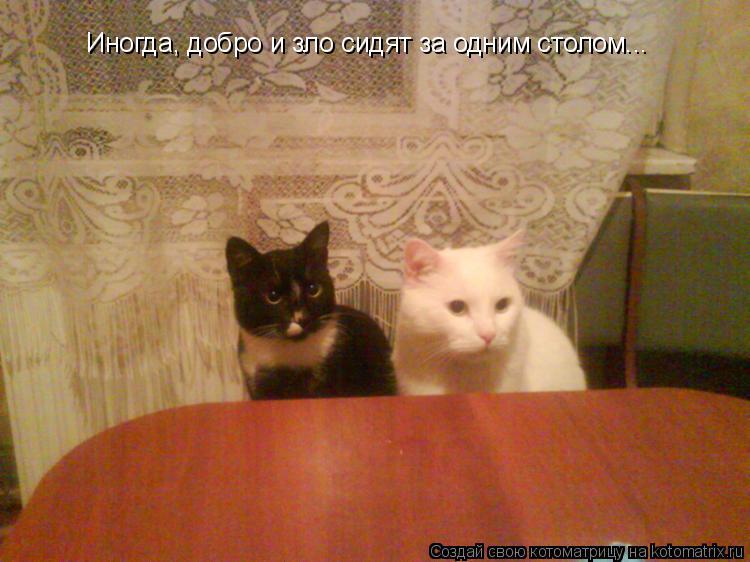 Котоматрица: Иногда, добро и зло сидят за одним столом...
