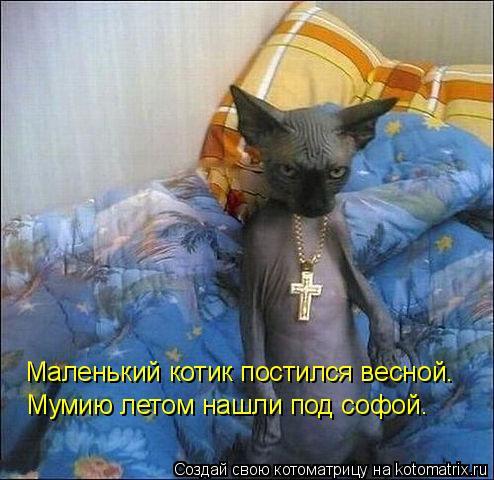 Котоматрица: Маленький котик постился весной. Мумию летом нашли под софой.
