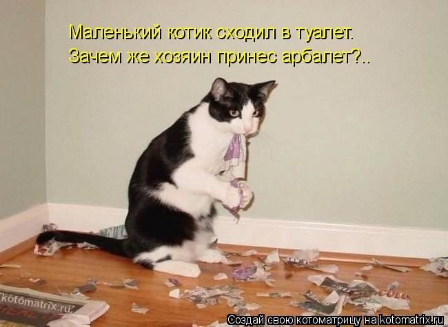 Котоматрица: Маленький котик сходил в туалет. Зачем же хозяин принес арбалет?..