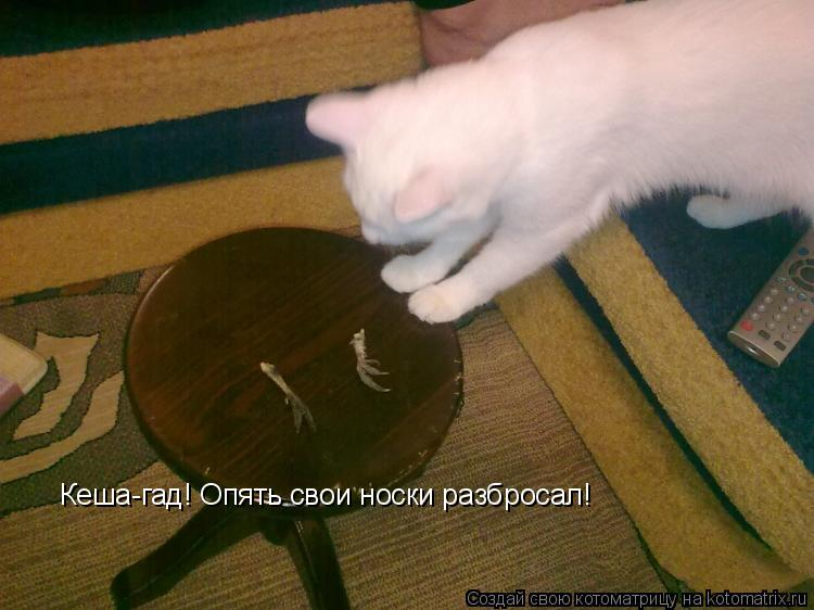Котоматрица: Кеша-гад! Опять свои носки разбросал!