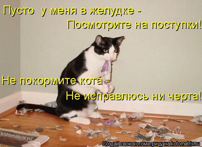 Котоматрица: Пусто  у меня в желудке -  Посмотрите на поступки! Не покормите кота -  Не исправлюсь ни черта!