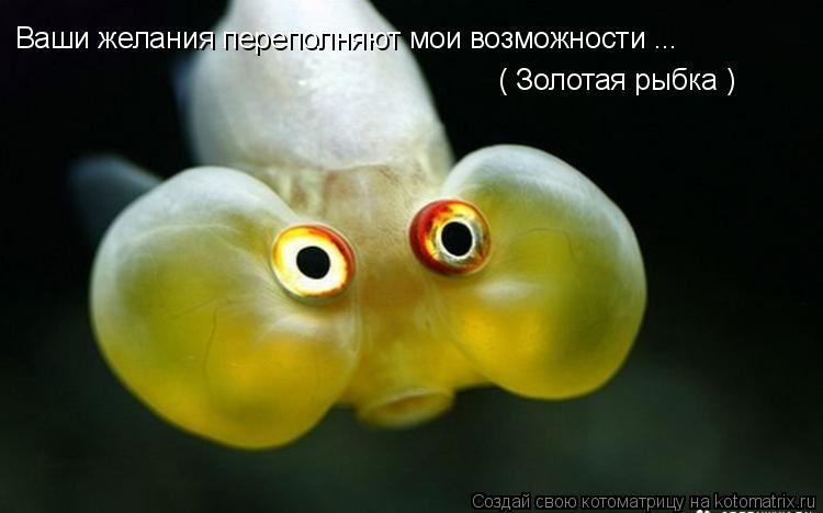 Котоматрица: Ваши желания переполняют мои возможности ... ( Золотая рыбка )