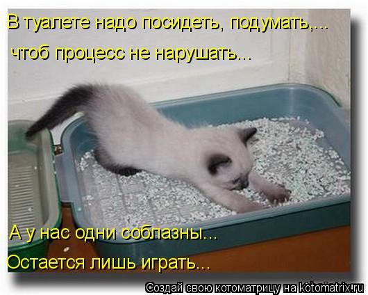Котоматрица: В туалете надо посидеть, подумать,... чтоб процесс не нарушать...  А у нас одни соблазны... Остается лишь играть...