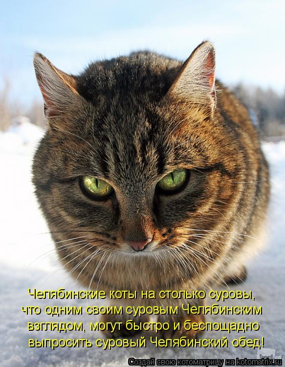 Котоматрица: Челябинские коты на столько суровы,   что одним своим суровым Челябинским  взглядом, могут быстро и беспощадно   выпросить суровый Челябинс