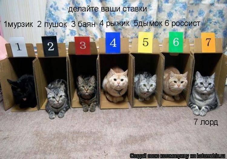 Котоматрица: делайте ваши ставки 1мурзик  2 пушок  3 баян 4 рыжик  5дымок 6 россист 7 лорд
