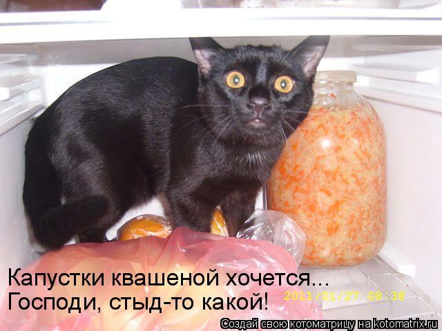 Котоматрица - Капустки квашеной хочется...  Господи, стыд-то какой!