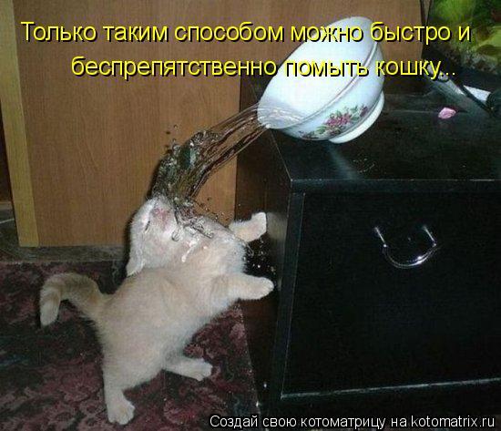 Котоматрица: Только таким способом можно быстро и   беспрепятственно помыть кошку...