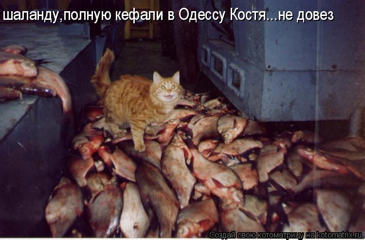 Котоматрица: шаланду,полную кефали в Одессу Костя...не довез