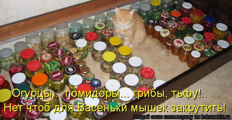 Котоматрица - Огурцы... помидоры... грибы, тьфу!.. Нет чтоб для Васеньки мышек закру