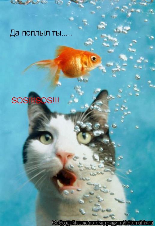 Котоматрица: Да поплыл ты..... SOS!!!SOS!!!