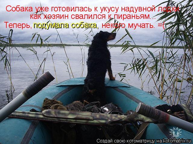 Котоматрица: Собака уже готовилась к укусу надувной лодки как хозяин свалился к пираньям... Теперь, подумала собака, некого мучать. =(