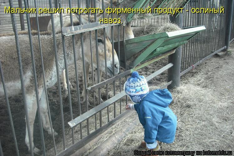 Котоматрица: Мальчик решил потрогать фирменный продукт - ослиный навоз.