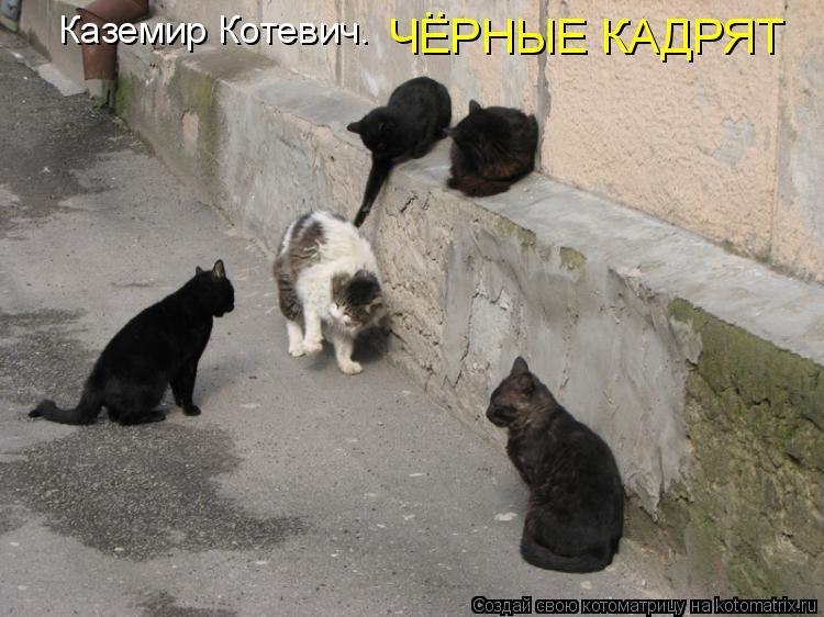 Котоматрица: Каземир Котевич. ЧЕРНЫЕ КАДРЯТ ..