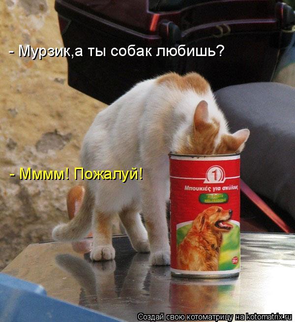 - Мурзик,а ты собак любишь? - Мммм! Пожалуй!