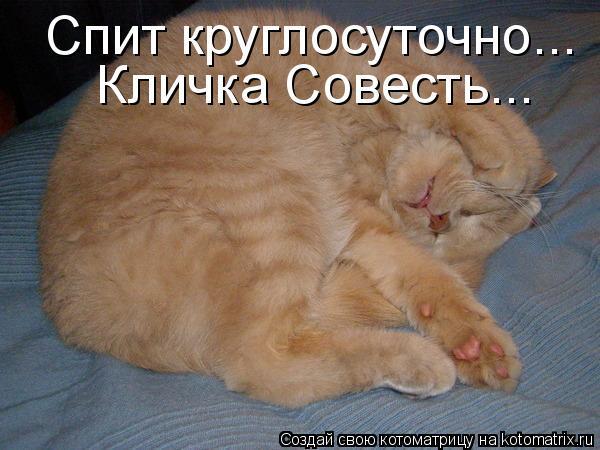 Котоматрица: Спит круглосуточно... Кличка Совесть...