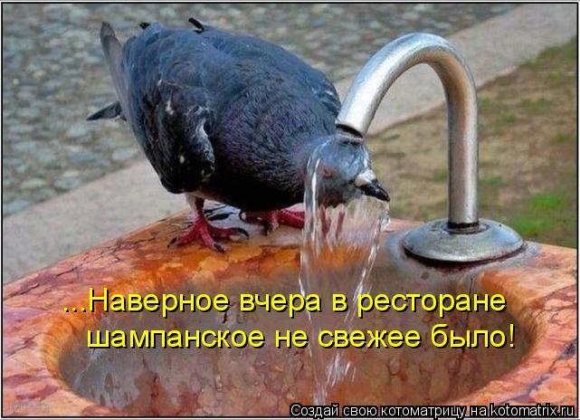 Котоматрица: ...Наверное вчера в ресторане  шампанское не свежее было!
