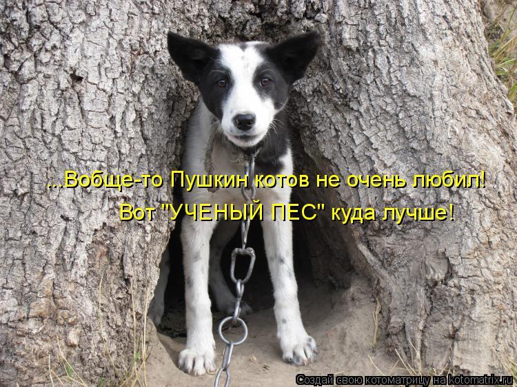 """Котоматрица: ...Вобще-то Пушкин котов не очень любил! Вот """"УЧЕНЫЙ ПЕС"""" куда лучше!"""