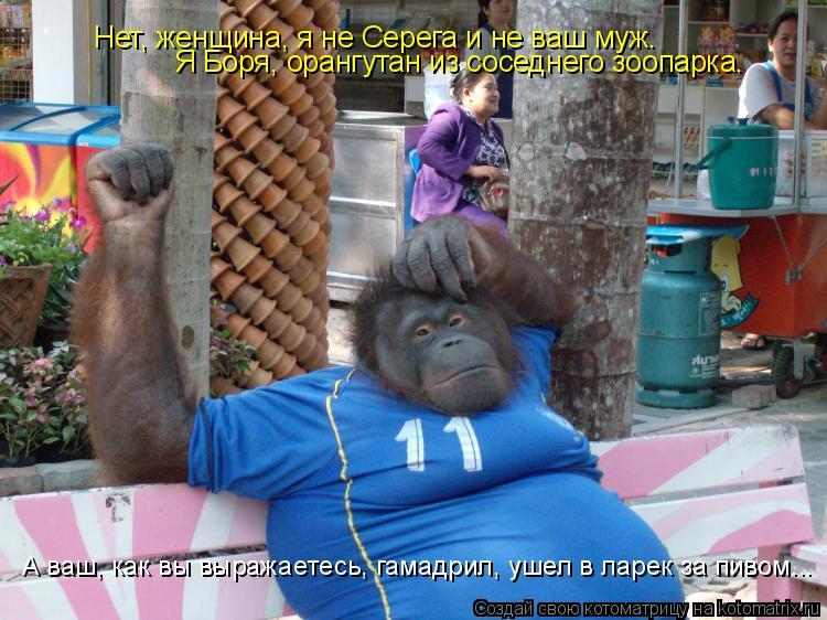 Котоматрица: Нет, женщина, я не Серега и не ваш муж.  Я Боря, орангутан из соседнего зоопарка. А ваш, как вы выражаетесь, гамадрил, ушел в ларек за пивом...