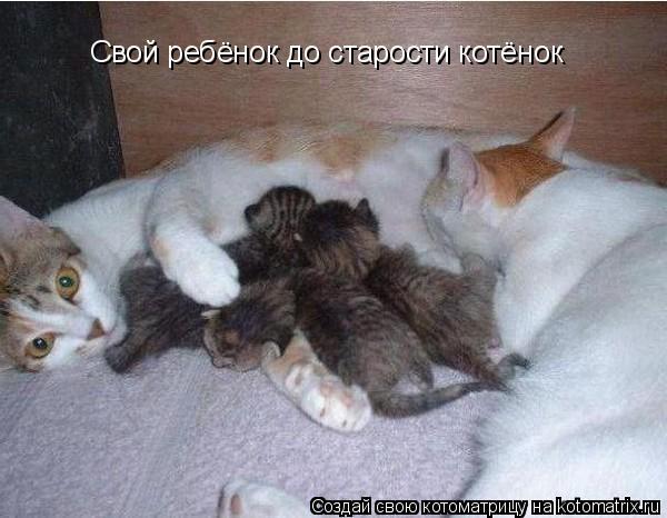 Котоматрица - Свой ребёнок до старости котёнок