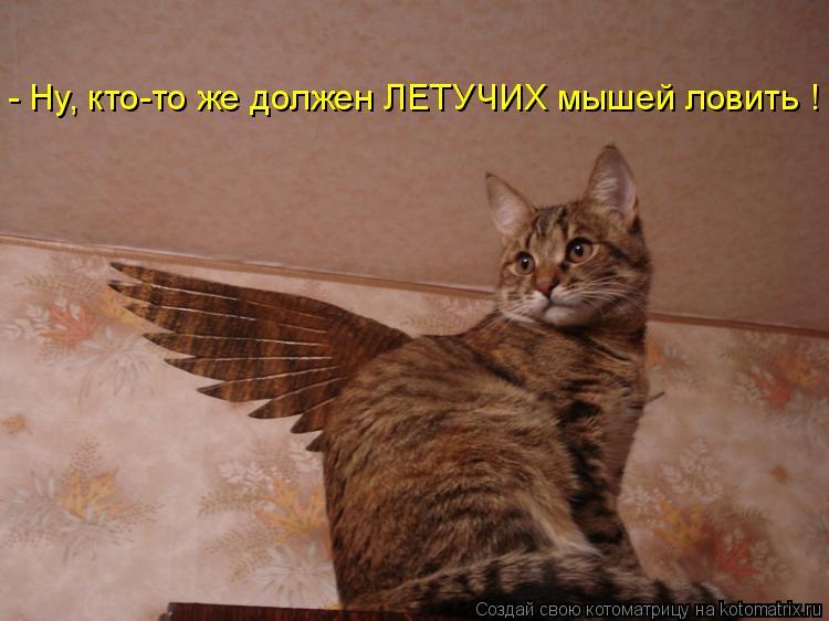 - Ну, кто-то же должен ЛЕТУЧИХ мышей ловить !