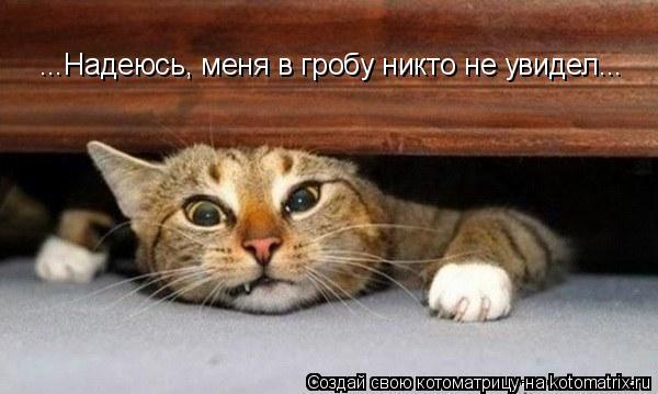Котоматрица: ...Надеюсь, меня в гробу никто не увидел...