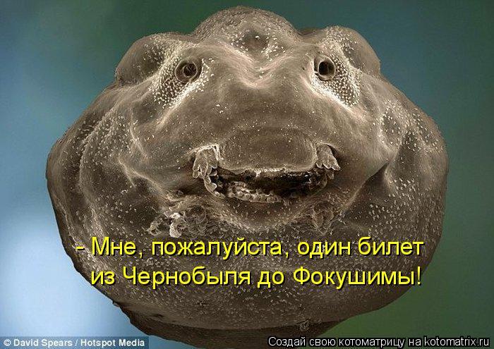 Котоматрица: - Мне, пожалуйста, один билет из Чернобыля до Фокушимы!