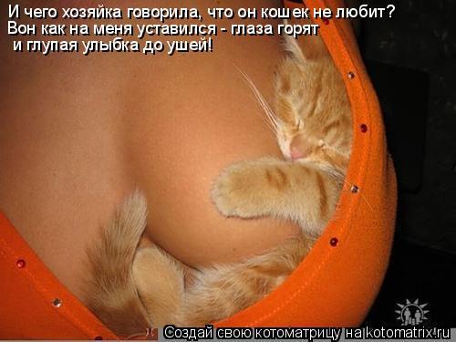 Котоматрица: И чего хозяйка говорила, что он кошек не любит?  Вон как на меня уставился - глаза горят  и глупая улыбка до ушей!
