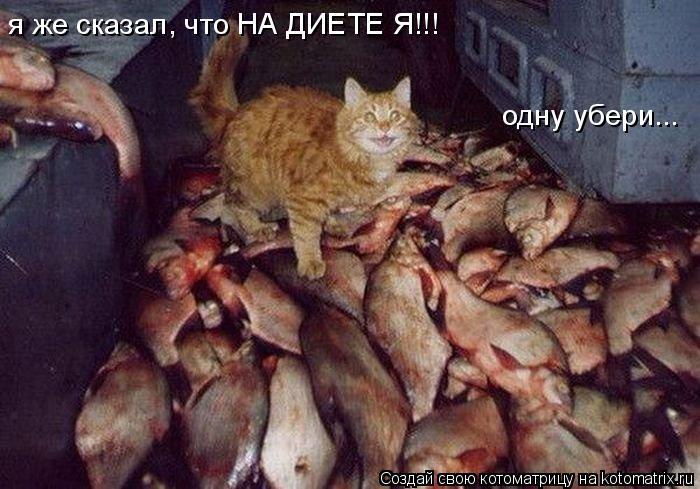 http://kotomatrix.ru/images/lolz/2011/03/16/854125.jpg