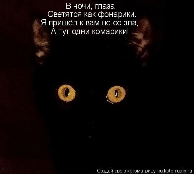Котоматрица: В ночи, глаза Светятся как фонарики. Я пришёл к вам не со зла, Я пришёл к вам не со зла, А тут одни комарики!