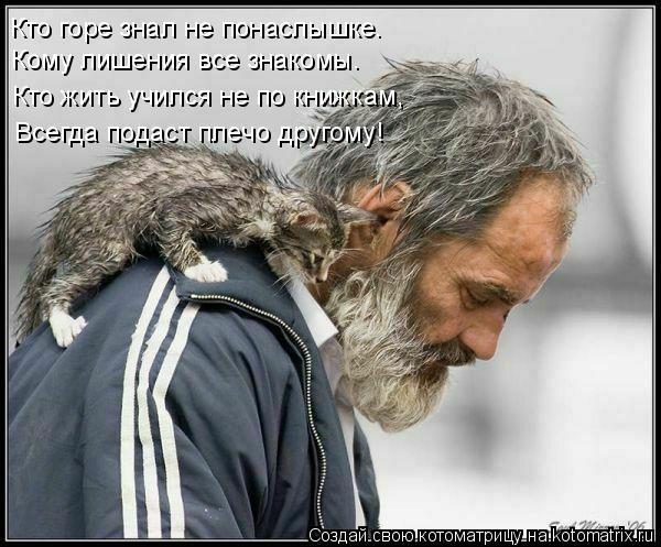 Котоматрица: Кто горе знал не понаслышке.  Кому лишения все знакомы. Кто жить учился не по книжкам, Всегда подаст плечо другому!