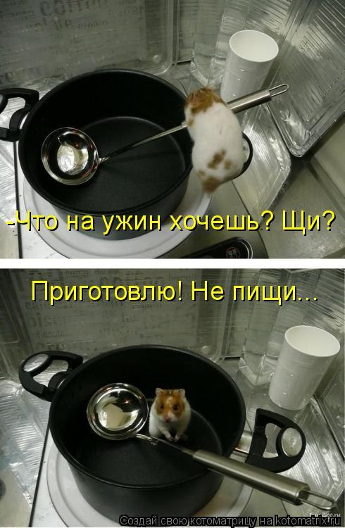 Котоматрица: -Что на ужин хочешь? Щи? Приготовлю! Не пищи...