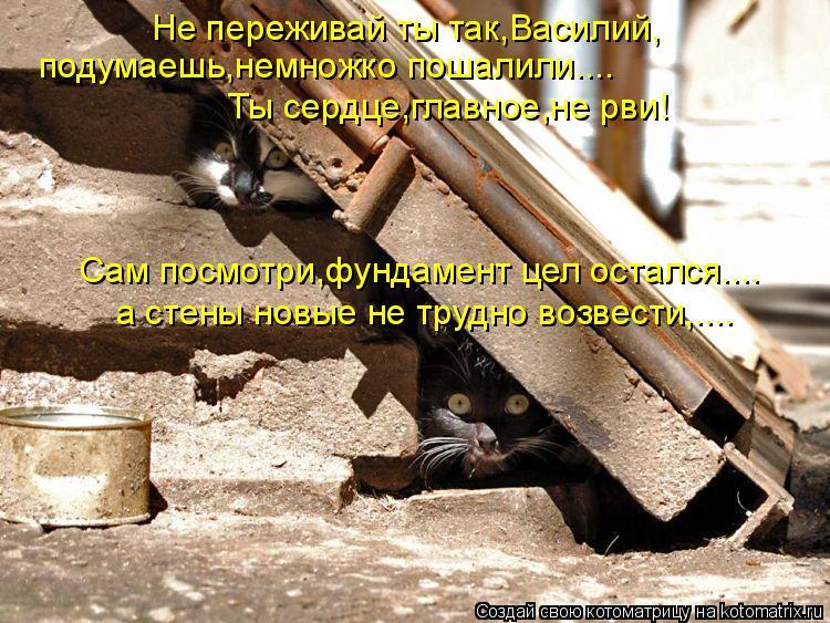 Котоматрица: Не переживай ты так,Василий, подумаешь,немножко пошалили.... Ты сердце,главное,не рви! Сам посмотри,фундамент цел остался.... а стены новые не