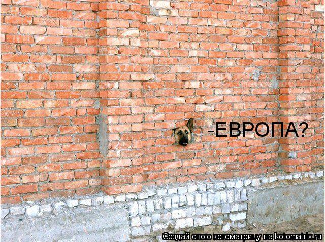Котоматрица: -ЕВРОПА?