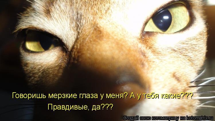 Котоматрица: Говоришь мерзкие глаза у меня? А у тебя какие???  Правдивые, да???