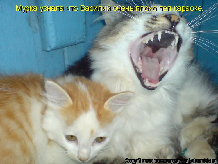 Котоматрица: Мурка узнала что Василий очень плохо пел караоке.