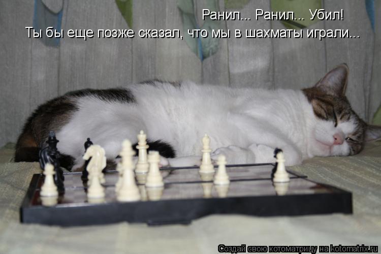 Котоматрица: Ранил... Ранил... Убил! Ты бы еще позже сказал, что мы в шахматы играли...
