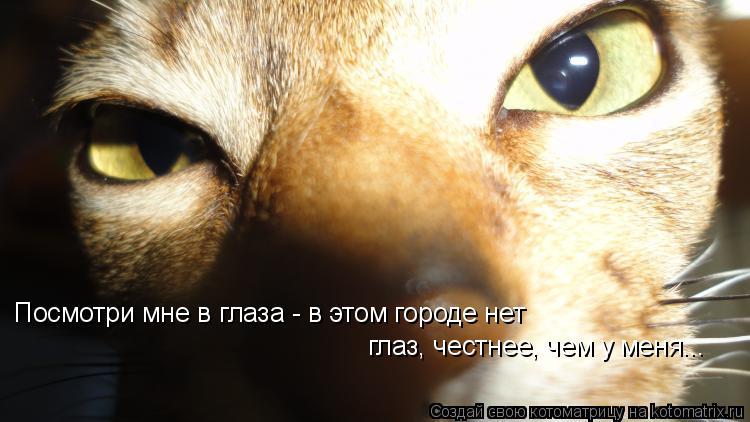 Котоматрица: Посмотри мне в глаза - в этом городе нет глаз, честнее, чем у меня...