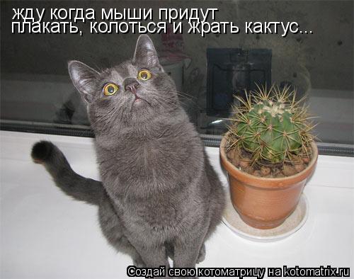 Котоматрица: жду когда мыши придут плакать, колоться и жрать кактус...