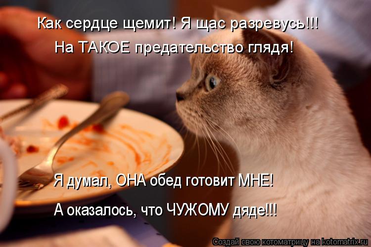 Котоматрица: Как сердце щемит! Я щас разревусь!!! На ТАКОЕ предательство глядя! Я думал, ОНА обед готовит МНЕ! А оказалось, что ЧУЖОМУ дяде!!!