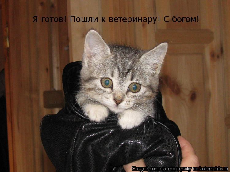 Котоматрица: Я готов! Пошли к ветеринару! С богом!