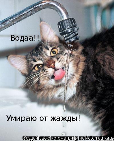 Котоматрица: Водаа!! Умираю от жажды!