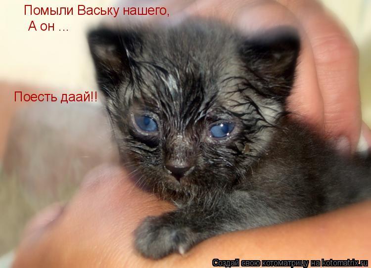 Котоматрица: Помыли Ваську нашего, А он ... Поесть даай!!