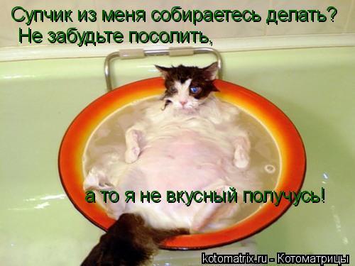 Котоматрица: Супчик из меня собираетесь делать? Не забудьте посолить,  а то я не вкусный получусь!