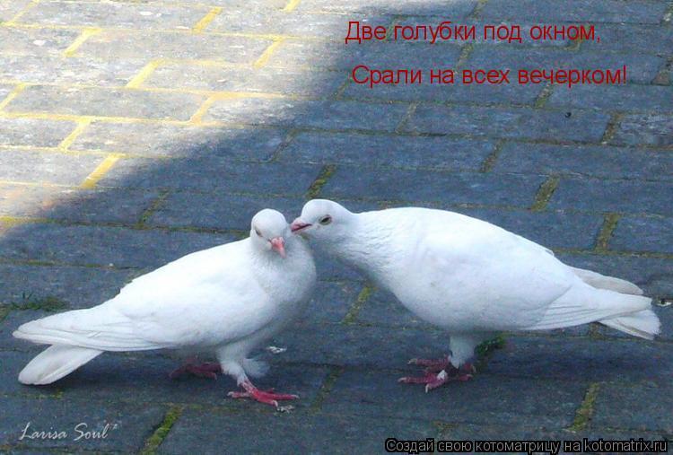 Котоматрица: Две голубки под окном, Срали на всех вечерком!
