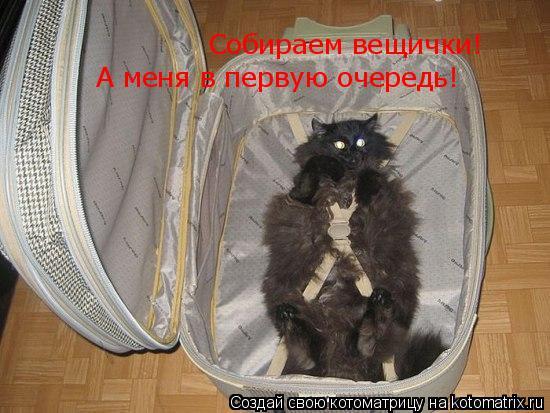 Котоматрица: Собираем вещички!  А меня в первую очередь!