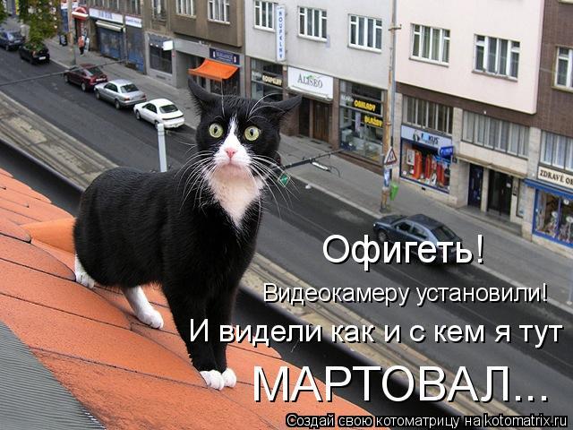 Котоматриця!)))) - Страница 4 856718
